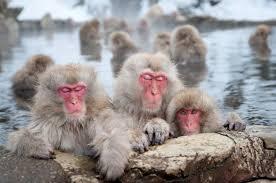 snow_monkey3.jpg