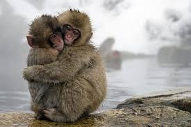 snow_monkey5.jpg